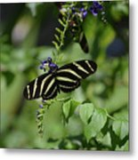 Gorgeous Zebra Butterfly On Some Blue Flowers Metal Print