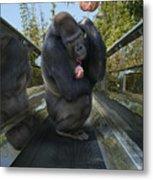 Gorilla With Lollipop Metal Print
