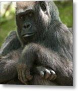 Gorilla1 Metal Print
