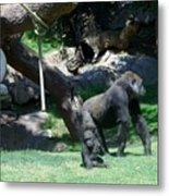 Gorillas Mary Joe Baby And Emonty Mother 7 Metal Print