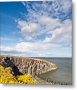 Gorse At Cullernose Point Metal Print