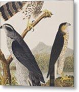 Goshawk And Stanley Hawk Metal Print