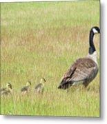 Goslings Following Mama Metal Print