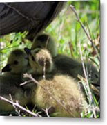 Gosling's In The Shade Metal Print