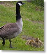 Goslings With Mother Goose Metal Print