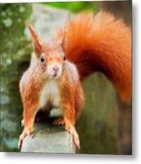 Got Nuts? Metal Print