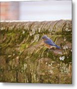 Governor's Palace Bluebird Metal Print