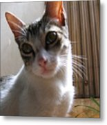Gowrie The Cat Metal Print
