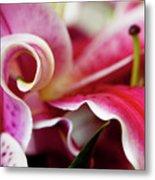 Graceful Lily Series 25 Metal Print