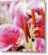 Graceful Lily Series 29 Metal Print