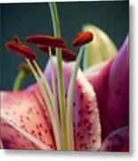 Graceful Lily Series 7 Metal Print