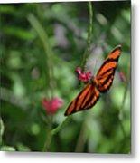 Graceful Oak Tiger Butterfly Around Pink Flowers Metal Print