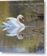 Graceful Swan I Metal Print
