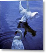 Graceful Swans Metal Print