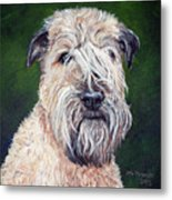 Gracie, Soft Coated Wheaten Terrier Metal Print
