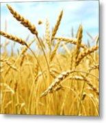 Grain Field Metal Print by Elena Elisseeva