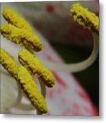 Grains Of Pollen Metal Print