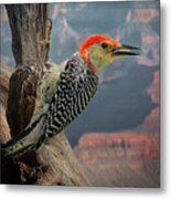 Grand Canyon Woodpecker Metal Print