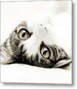 Grand Kitty Cuteness Bw Metal Print by Andee Design