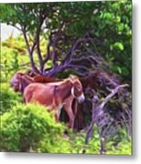 Grand Turk Donkeys In The Shade Metal Print