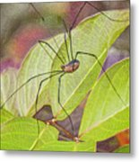 Grandaddy Long Legs Metal Print