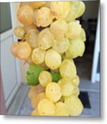 Grape From Chios Mountains In Greece Metal Print