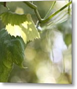 Grape Leaf Metal Print