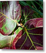 Grape Leaf Sheen Metal Print