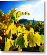 Grape Leaves And The Sky Metal Print