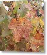 Grape Leaves In The Fall Metal Print