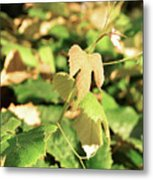 Grape Vine 3 Metal Print