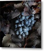 grape vine I Metal Print