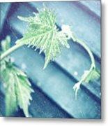 Grape Vine Old Style Background Metal Print