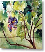 Grape Vines At Otter Creek Metal Print