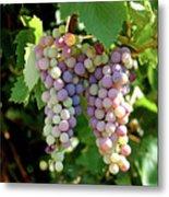 Grapes In Color  Metal Print