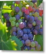Grapes Metal Print by Kelly Wade