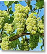 Grapes Not Wrath Metal Print