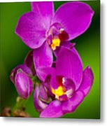 Grapette Ground Orchid Metal Print