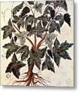 Grapevine, 1229 Metal Print