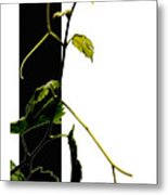 Grapevine Collage Metal Print