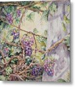Grapevine Laurel Lakevineyard Metal Print