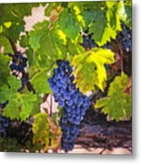 Grapevine With Texture Metal Print