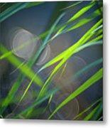 Grass And Evening Light Metal Print
