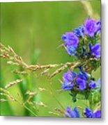 Grass And Flower  Metal Print