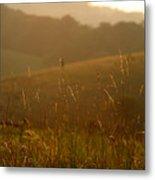 Grass And Sunshine Metal Print