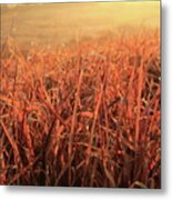 Grass Dyed In The Morning Glow Metal Print
