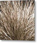 Grass Explosion Metal Print