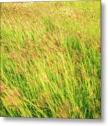 Grass Field Landscape Illuminated By Sunset Metal Print