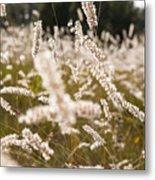 Grass Field Metal Print
