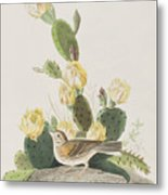 Grass Finch Or Bay Winged Bunting Metal Print